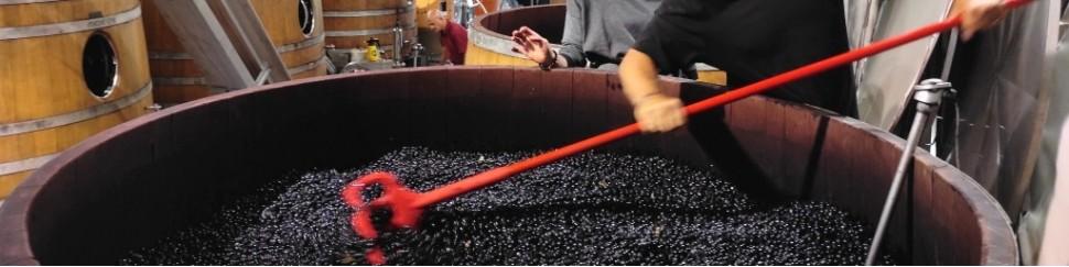 Cellier Prestige - La sélection de vin rouge, vin rosé, vin blanc, champagne et vin bio