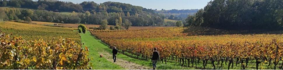 Domaines - Tous les vins que vous trouverez chez  My shop